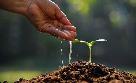 Изображение - Помощь малому бизнесу от государства Hand-Watering-Plant.2e16d0ba.fill-460x280